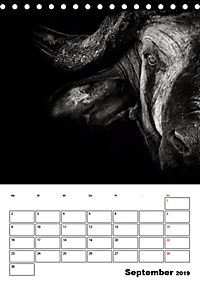 Charakterköpfe aus der Welt der Tiere (Tischkalender 2019 DIN A5 hoch) - Produktdetailbild 9