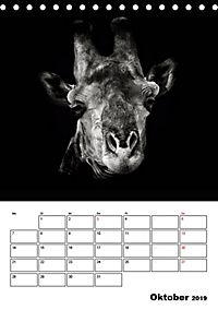 Charakterköpfe aus der Welt der Tiere (Tischkalender 2019 DIN A5 hoch) - Produktdetailbild 10