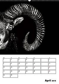 Charakterköpfe aus der Welt der Tiere (Wandkalender 2019 DIN A2 hoch) - Produktdetailbild 4