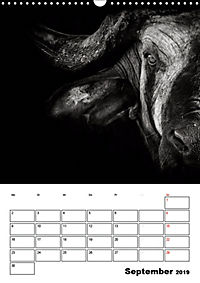 Charakterköpfe aus der Welt der Tiere (Wandkalender 2019 DIN A3 hoch) - Produktdetailbild 9