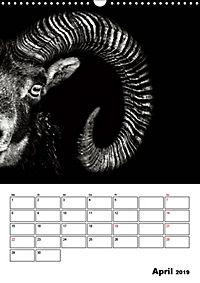 Charakterköpfe aus der Welt der Tiere (Wandkalender 2019 DIN A3 hoch) - Produktdetailbild 4