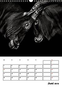 Charakterköpfe aus der Welt der Tiere (Wandkalender 2019 DIN A3 hoch) - Produktdetailbild 6