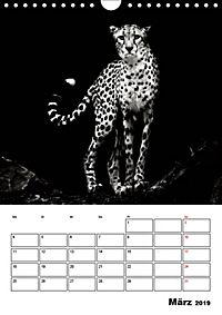Charakterköpfe aus der Welt der Tiere (Wandkalender 2019 DIN A4 hoch) - Produktdetailbild 3