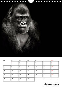 Charakterköpfe aus der Welt der Tiere (Wandkalender 2019 DIN A4 hoch) - Produktdetailbild 1