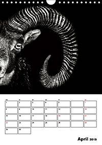Charakterköpfe aus der Welt der Tiere (Wandkalender 2019 DIN A4 hoch) - Produktdetailbild 4