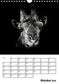 Charakterköpfe aus der Welt der Tiere (Wandkalender 2019 DIN A4 hoch) - Produktdetailbild 10