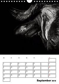 Charakterköpfe aus der Welt der Tiere (Wandkalender 2019 DIN A4 hoch) - Produktdetailbild 9