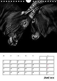 Charakterköpfe aus der Welt der Tiere (Wandkalender 2019 DIN A4 hoch) - Produktdetailbild 6