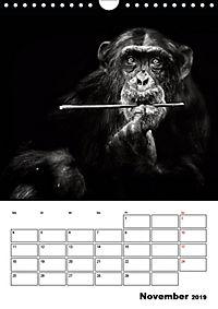 Charakterköpfe aus der Welt der Tiere (Wandkalender 2019 DIN A4 hoch) - Produktdetailbild 11