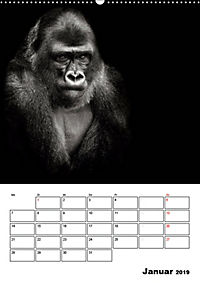 Charakterköpfe aus der Welt der Tiere (Wandkalender 2019 DIN A2 hoch) - Produktdetailbild 1