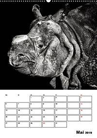 Charakterköpfe aus der Welt der Tiere (Wandkalender 2019 DIN A2 hoch) - Produktdetailbild 5