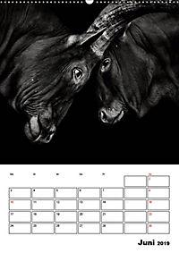 Charakterköpfe aus der Welt der Tiere (Wandkalender 2019 DIN A2 hoch) - Produktdetailbild 6