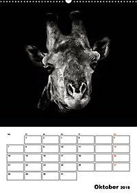 Charakterköpfe aus der Welt der Tiere (Wandkalender 2019 DIN A2 hoch) - Produktdetailbild 10