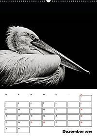 Charakterköpfe aus der Welt der Tiere (Wandkalender 2019 DIN A2 hoch) - Produktdetailbild 12