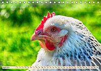 Charmante Hühner (Tischkalender 2019 DIN A5 quer) - Produktdetailbild 4