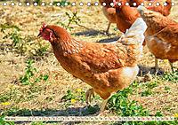 Charmante Hühner (Tischkalender 2019 DIN A5 quer) - Produktdetailbild 5