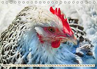 Charmante Hühner (Tischkalender 2019 DIN A5 quer) - Produktdetailbild 8