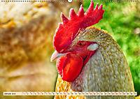 Charmante Hühner (Wandkalender 2019 DIN A2 quer) - Produktdetailbild 1