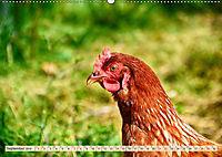 Charmante Hühner (Wandkalender 2019 DIN A2 quer) - Produktdetailbild 9