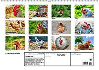 Charmante Hühner (Wandkalender 2019 DIN A2 quer) - Produktdetailbild 13