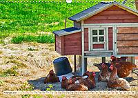 Charmante Hühner (Wandkalender 2019 DIN A3 quer) - Produktdetailbild 2