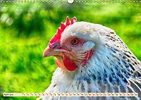 Charmante Hühner (Wandkalender 2019 DIN A3 quer) - Produktdetailbild 4
