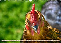 Charmante Hühner (Wandkalender 2019 DIN A3 quer) - Produktdetailbild 6
