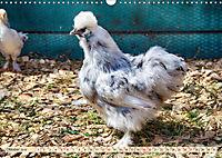 Charmante Hühner (Wandkalender 2019 DIN A3 quer) - Produktdetailbild 10