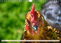 Charmante Hühner (Wandkalender 2019 DIN A4 quer) - Produktdetailbild 6