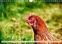 Charmante Hühner (Wandkalender 2019 DIN A4 quer) - Produktdetailbild 9