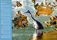 Charmantes Gezwitscher (Tischkalender 2019 DIN A5 quer) - Produktdetailbild 4