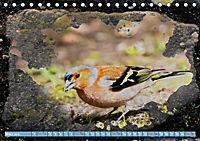 Charmantes Gezwitscher (Tischkalender 2019 DIN A5 quer) - Produktdetailbild 3