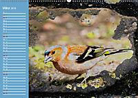Charmantes Gezwitscher (Wandkalender 2019 DIN A2 quer) - Produktdetailbild 3