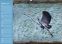 Charmantes Gezwitscher (Wandkalender 2019 DIN A2 quer) - Produktdetailbild 10