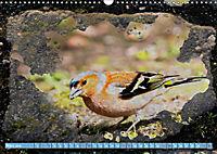 Charmantes Gezwitscher (Wandkalender 2019 DIN A3 quer) - Produktdetailbild 3