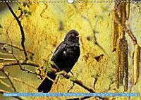 Charmantes Gezwitscher (Wandkalender 2019 DIN A3 quer) - Produktdetailbild 2