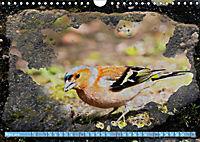Charmantes Gezwitscher (Wandkalender 2019 DIN A4 quer) - Produktdetailbild 3