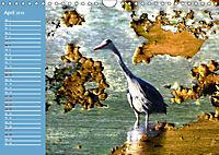 Charmantes Gezwitscher (Wandkalender 2019 DIN A4 quer) - Produktdetailbild 4