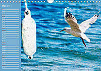 Charmantes Gezwitscher (Wandkalender 2019 DIN A4 quer) - Produktdetailbild 5
