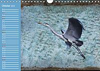 Charmantes Gezwitscher (Wandkalender 2019 DIN A4 quer) - Produktdetailbild 10