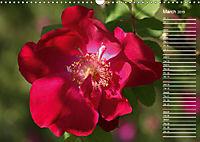 Charming Roses (Wall Calendar 2019 DIN A3 Landscape) - Produktdetailbild 3