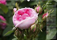 Charming Roses (Wall Calendar 2019 DIN A3 Landscape) - Produktdetailbild 5
