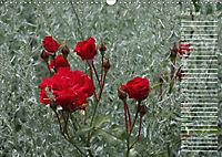 Charming Roses (Wall Calendar 2019 DIN A3 Landscape) - Produktdetailbild 7