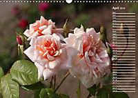 Charming Roses (Wall Calendar 2019 DIN A3 Landscape) - Produktdetailbild 4
