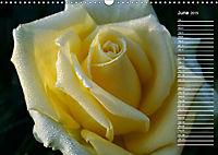 Charming Roses (Wall Calendar 2019 DIN A3 Landscape) - Produktdetailbild 6