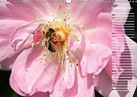 Charming Roses (Wall Calendar 2019 DIN A3 Landscape) - Produktdetailbild 11
