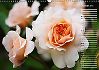Charming Roses (Wall Calendar 2019 DIN A3 Landscape) - Produktdetailbild 10