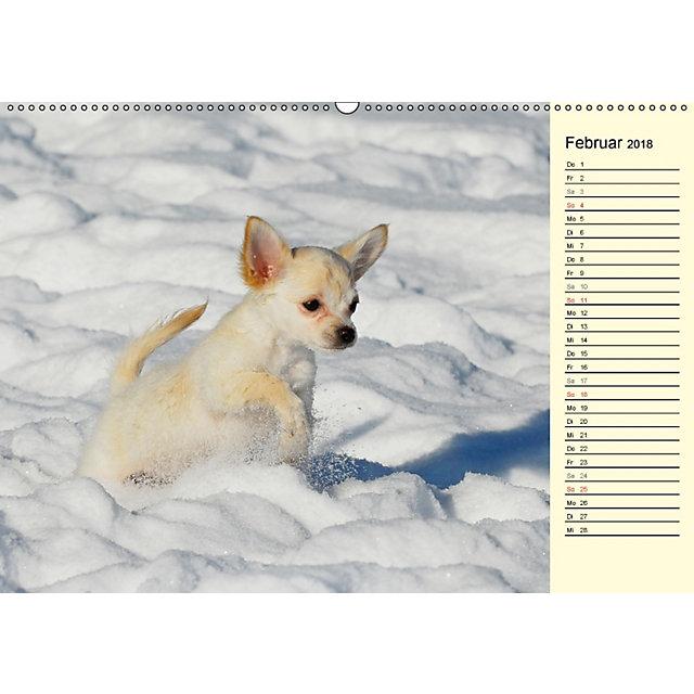 chihuahua kleine hunde ganz gro wandkalender 2018 din a2 quer kalender bestellen. Black Bedroom Furniture Sets. Home Design Ideas
