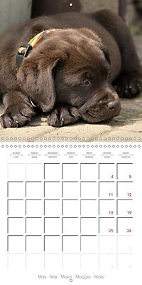 Chocolate Labs (Wall Calendar 2019 300 × 300 mm Square) - Produktdetailbild 5