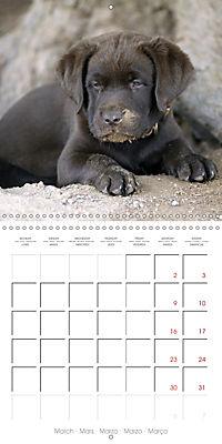 Chocolate Labs (Wall Calendar 2019 300 × 300 mm Square) - Produktdetailbild 3
